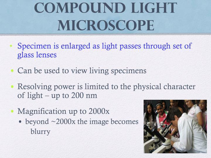 Compound Light Microscope