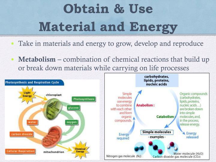 Obtain & Use