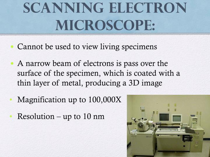 Scanning Electron Microscope: