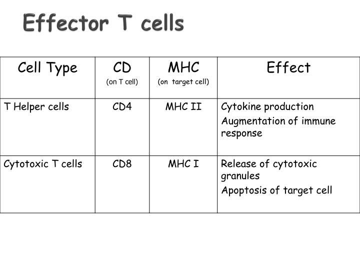 Effector T cells