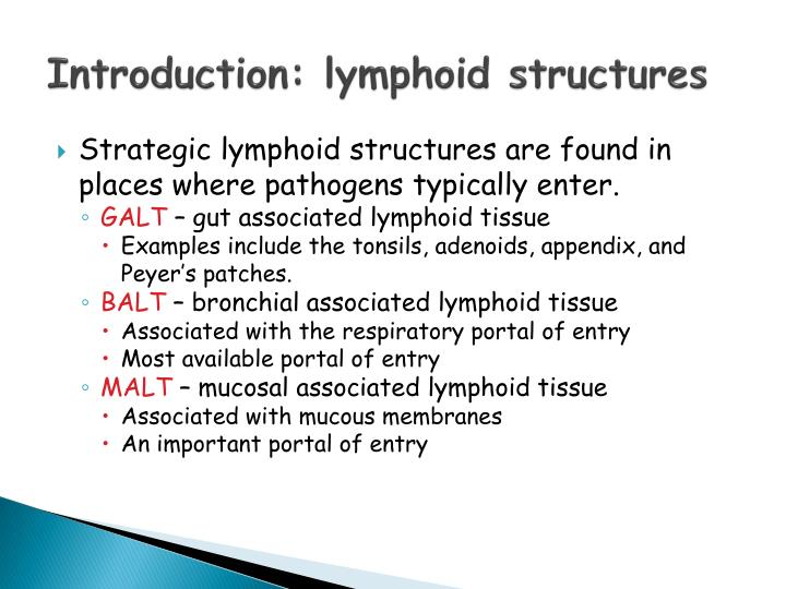 Introduction: lymphoid structures