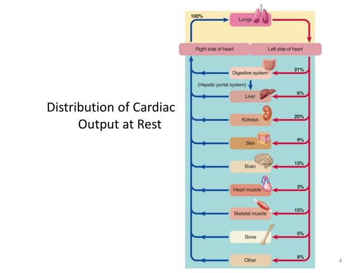 Distribution of Cardiac Output at Rest