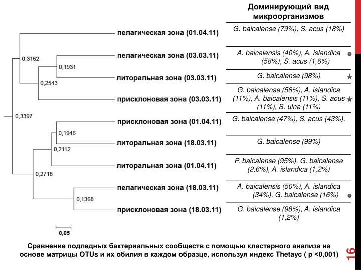 Сравнение подледных бактериальных сообществ с помощью кластерного анализа на