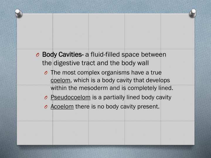Body Cavities-