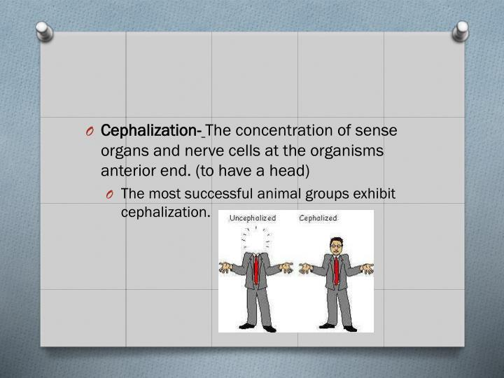 Cephalization-
