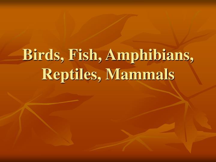 Birds, Fish, Amphibians, Reptiles, Mammals