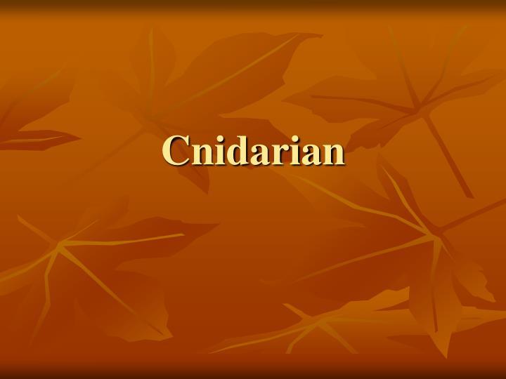 Cnidarian