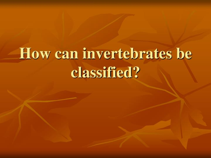 How can invertebrates be classified?