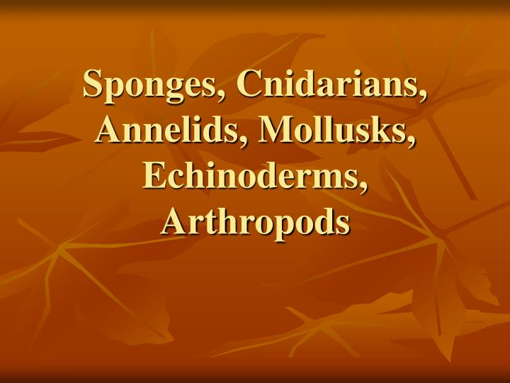 Sponges, Cnidarians, Annelids, Mollusks, Echinoderms, Arthropods