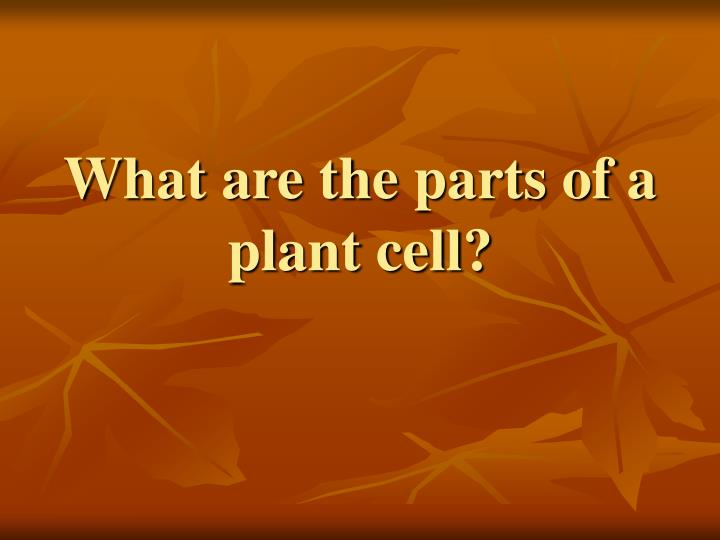 What are the parts of a plant cell?