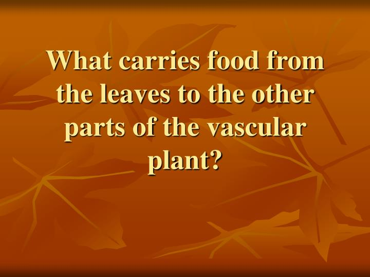 What carries food from the leaves to the other parts of the vascular plant?