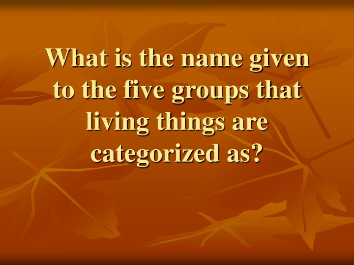 What is the name given to the five groups that living things are categorized as?