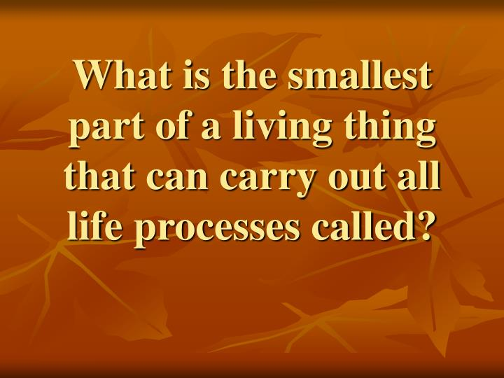 What is the smallest part of a living thing that can carry out all life processes called?