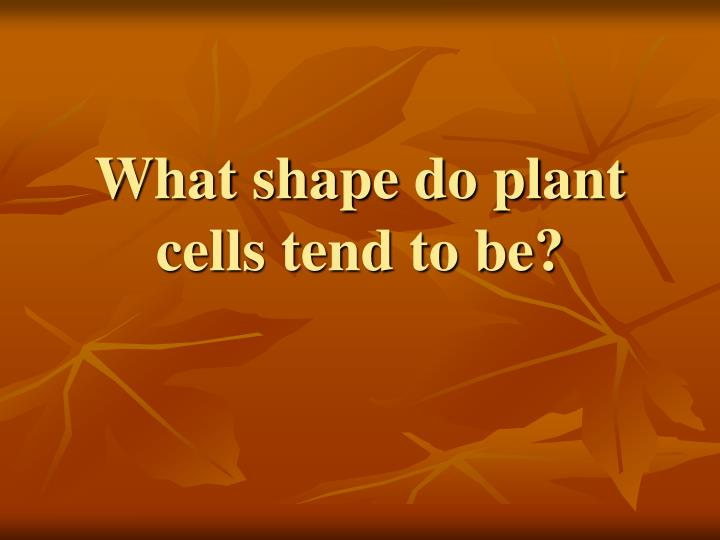 What shape do plant cells tend to be?