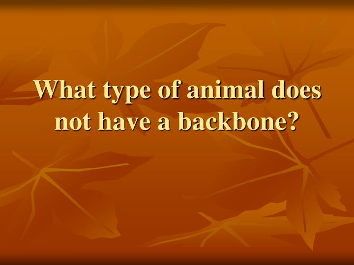 What type of animal does not have a backbone?