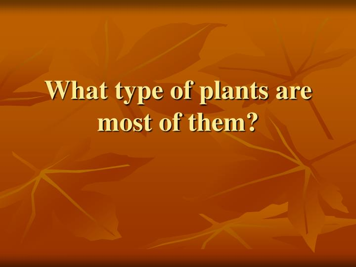 What type of plants are most of them?