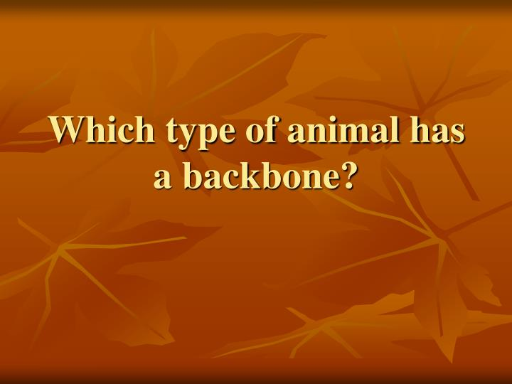 Which type of animal has a backbone?