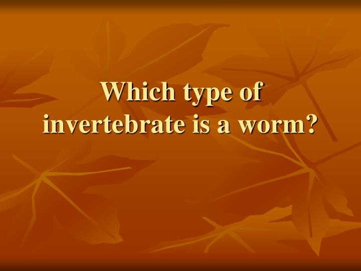 Which type of invertebrate is a worm?