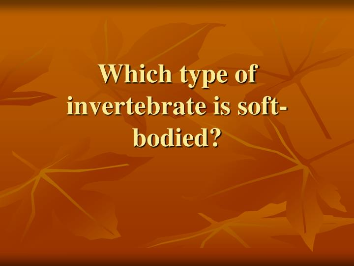 Which type of invertebrate is soft-bodied?