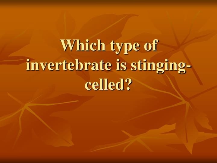 Which type of invertebrate is stinging-celled?