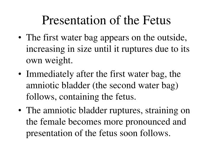 Presentation of the Fetus