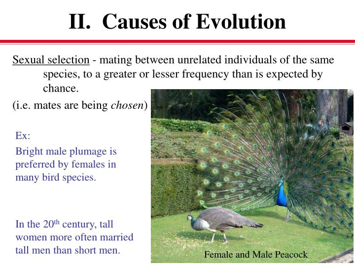 II.  Causes of Evolution