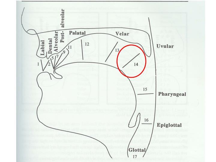 Uvular