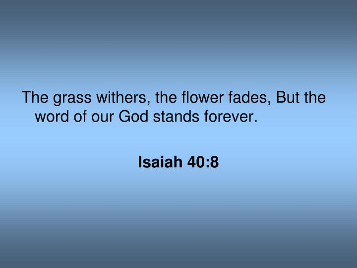 The grass withers, the flower fades, But the word of our God stands forever.