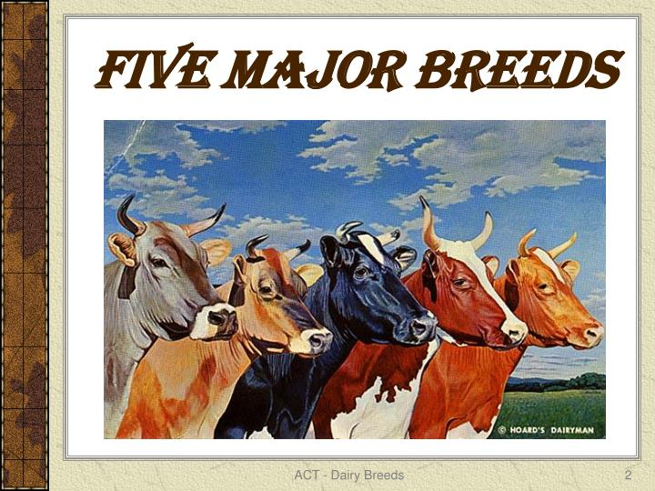 FIVE MAJOR BREEDS