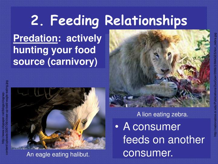 2. Feeding Relationships