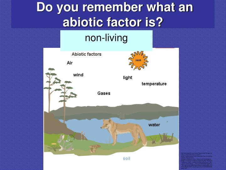 Do you remember what an abiotic factor is?