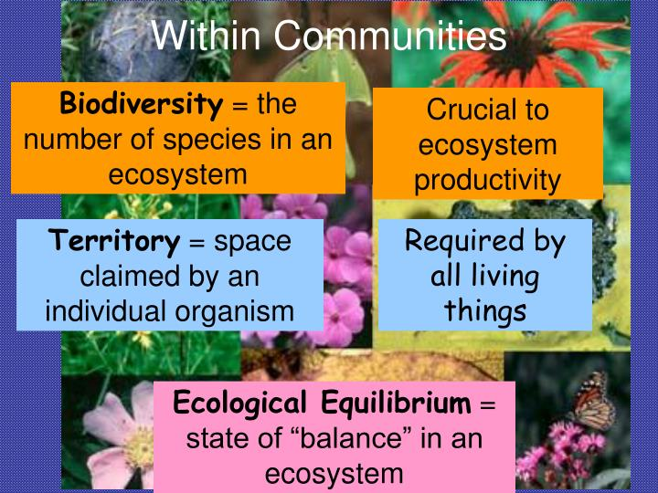 Within Communities