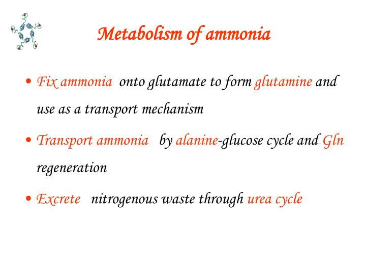 Metabolism of ammonia