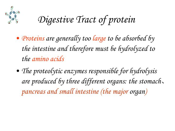 Digestive Tract of protein