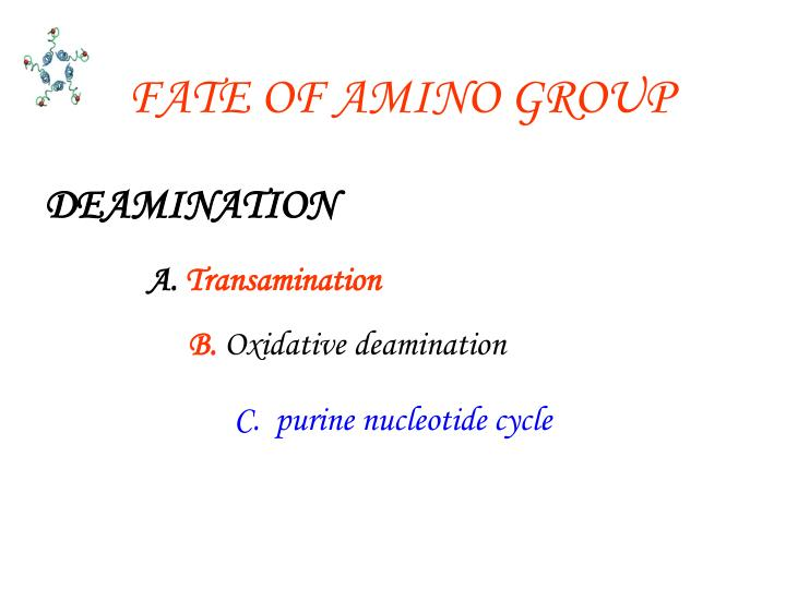 FATE OF AMINO GROUP
