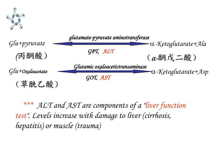 glutamate-pyruvate aminotransferase