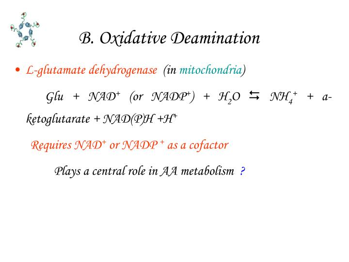 B. Oxidative Deamination