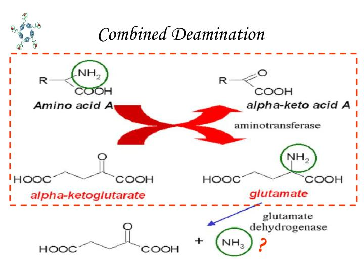 Combined Deamination