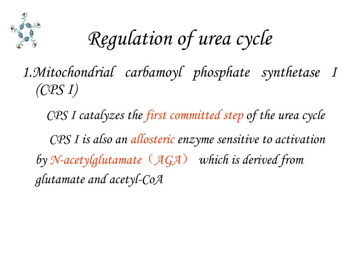 Regulation of urea cycle
