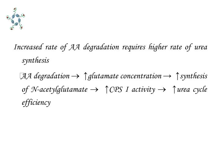 Increased rate of AA degradation requires higher rate of urea synthesis
