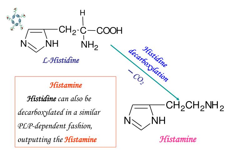 Histidine decarboxylation