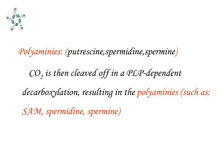 Polyaminies: