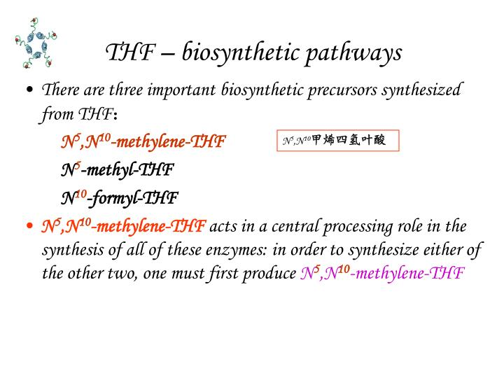 THF – biosynthetic pathways