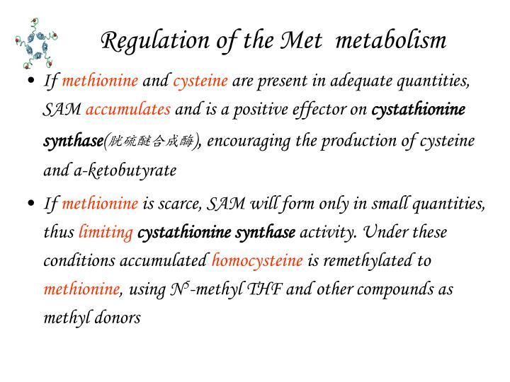 Regulation of the Met  metabolism