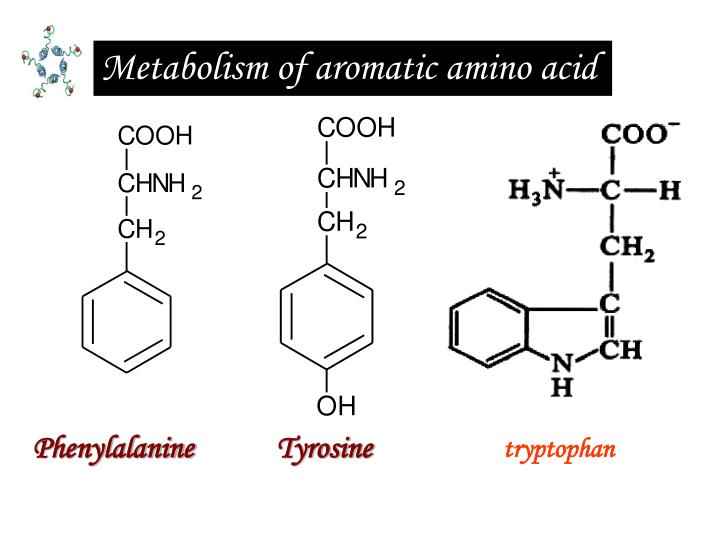 Metabolism of aromatic amino acid