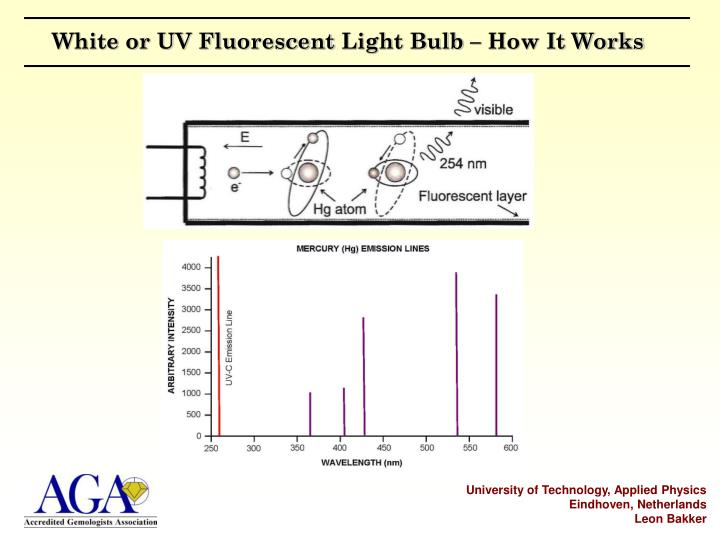 White or UV Fluorescent