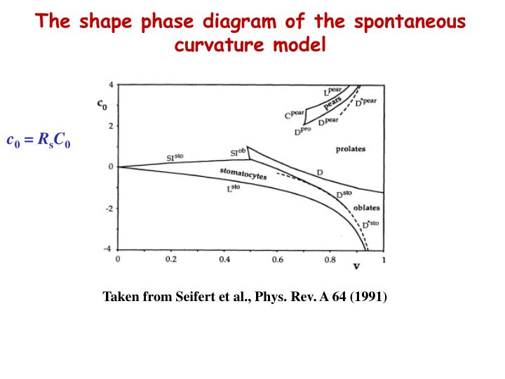 The shape phase diagram of the spontaneous curvature model