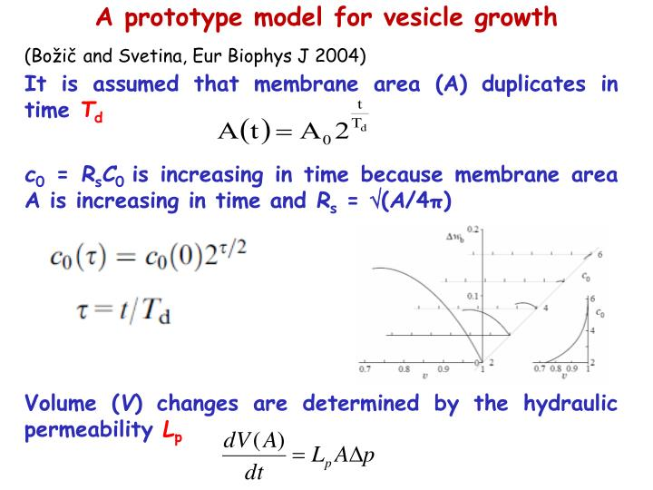 A prototype model for vesicle growth