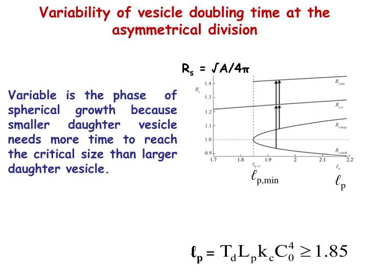 Variability of vesicle doubling time at the asymmetrical division