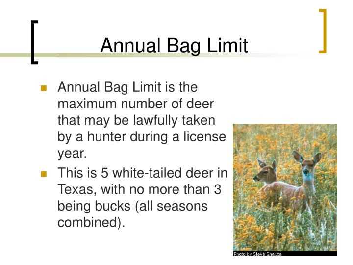Ppt ethical deer hunting in texas powerpoint for Texas fishing bag limits